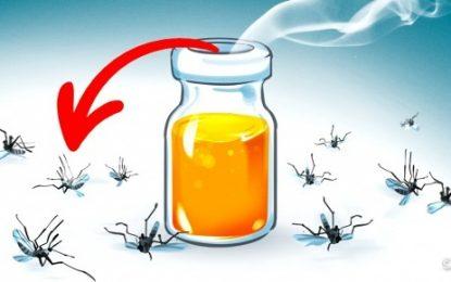 9 aromas que afugentam os mosquitos