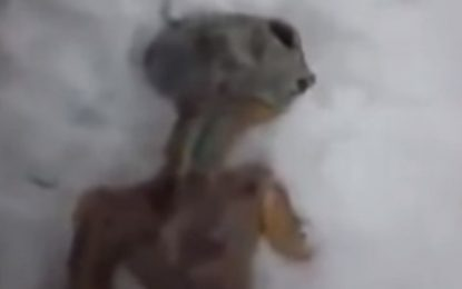 VEJA VÍDEO: Suposto flagra de ser extraterrestre chama atenção de internautas