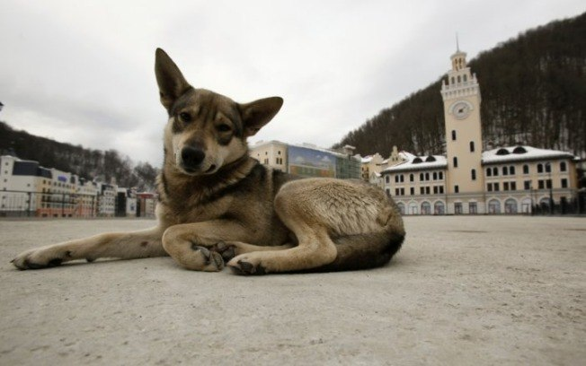 """Rússia extermina cachorros de rua antes da Copa para """"limpar"""" as cidades"""