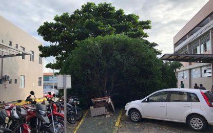 Árvore cai no estacionamento do Hospital Napoleão Laureano, em João Pessoa