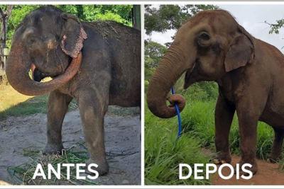 Imagem que mostra o antes e depois da elefanta Lady chama a atenção de internautas